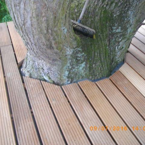 Baumeinfassung der Terrasse mit Baumdurchmesser etwa 80 cm